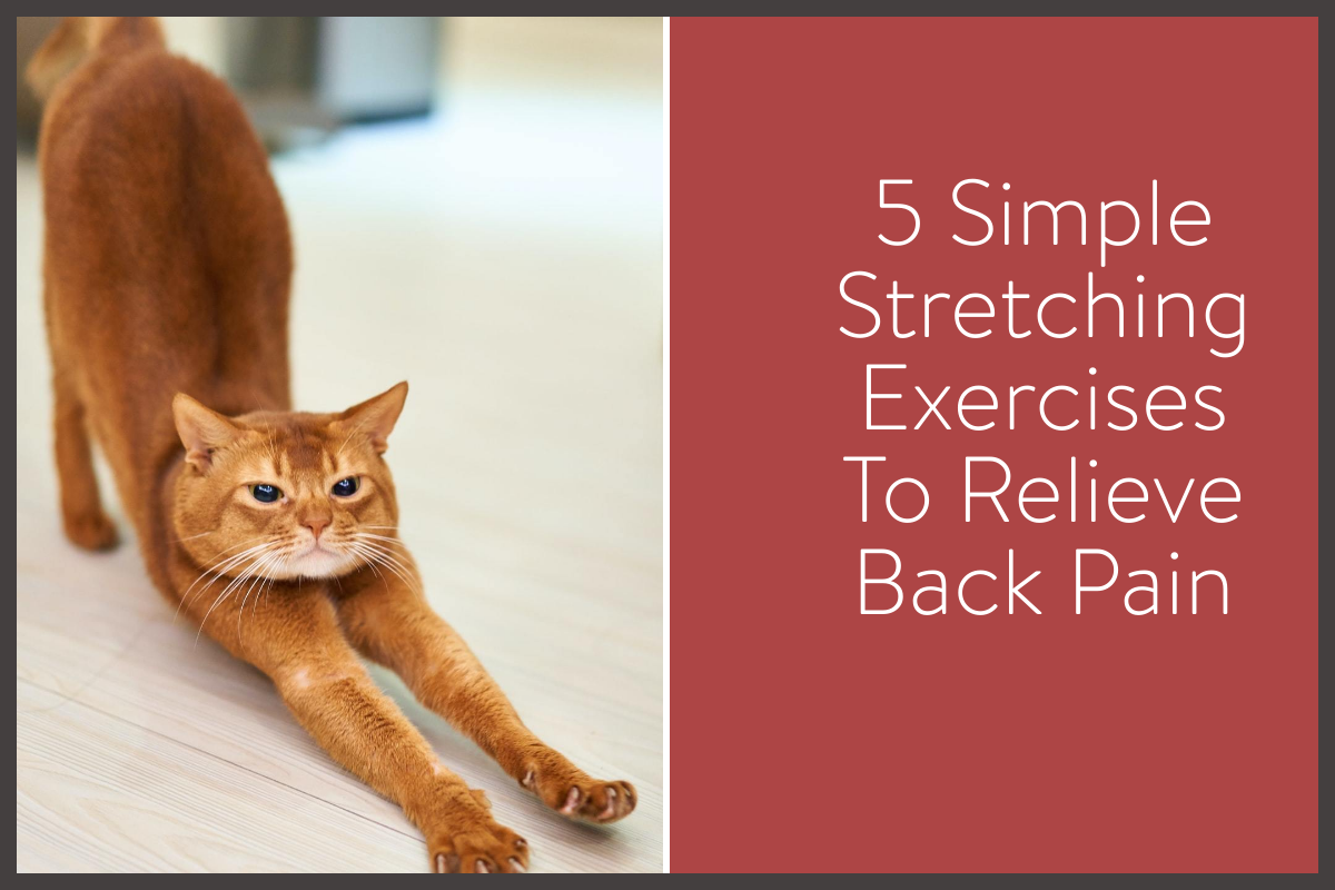 blog post image with stretching cat